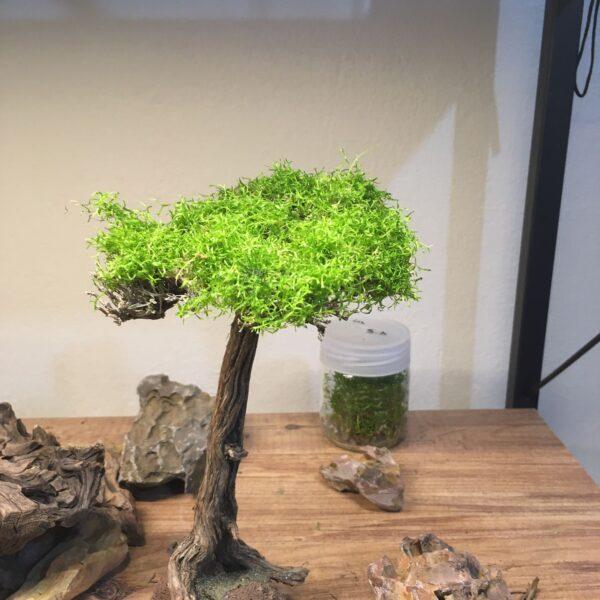 Moss Ağacı(MT11)